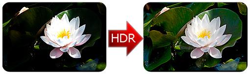 lotus-hdr-01